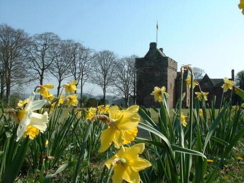 Hunterston Castle with daffodils