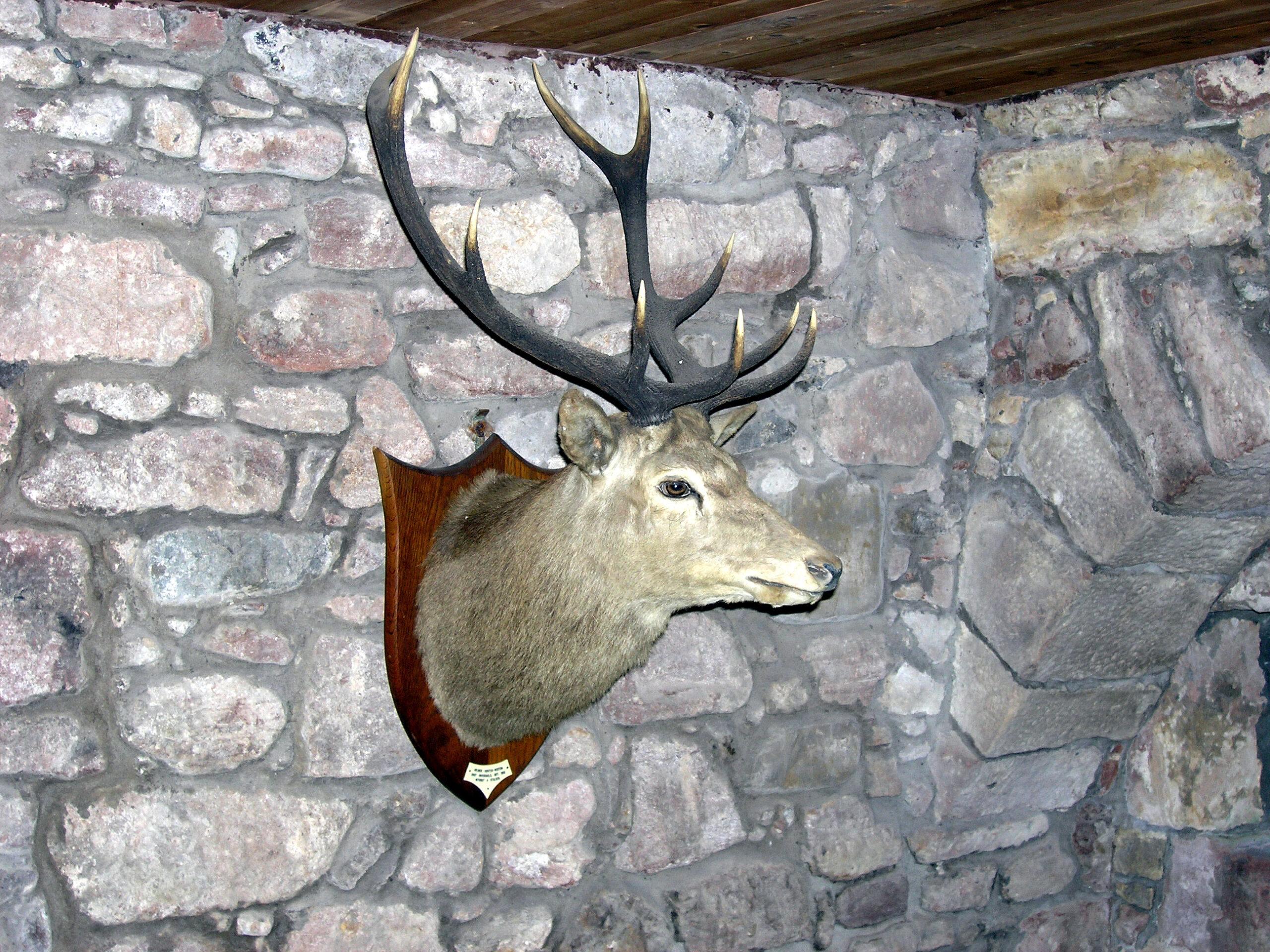 Hunterston Castle Interior Deer Head
